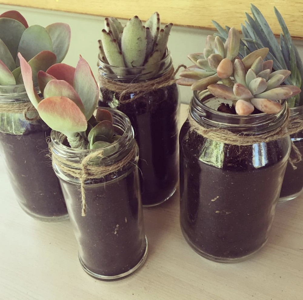 Five plants placed in glass jars