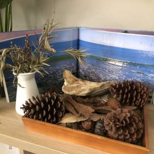 Pine cones and tree bark in wooden tray with open book display ocean behind square