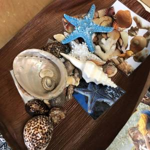 seashells in wooden tray